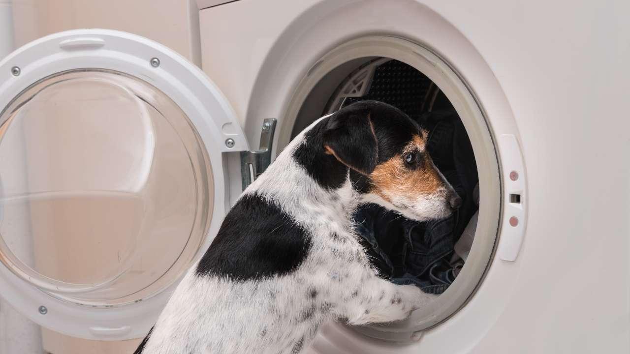 Il cane ha paura della lavatrice