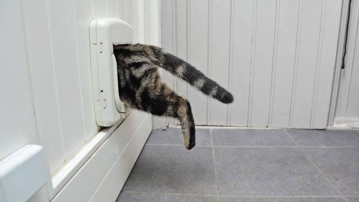 Come scegliere la gattaiola