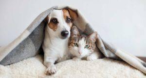 Norme UE di tutela degli animali da compagnia
