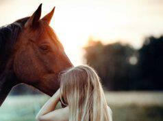 Morte improvvisa del cavallo