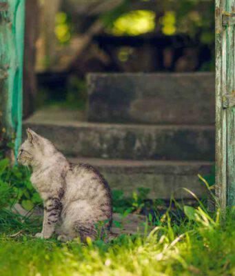 Si possono inseguire i propri animali nella proprietà altrui?