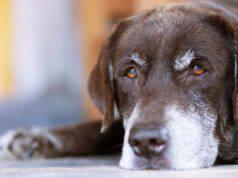 Come capire l'età di un cane