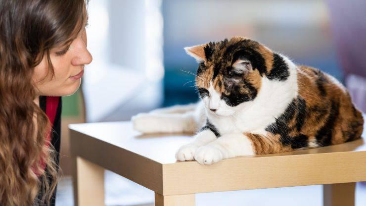 Come punire il gatto