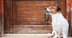 Come abituare il cane al collare