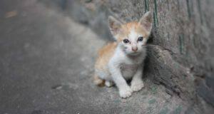 Cosa rischia chi abbandona un gatto
