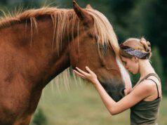 Come superare la morte del cavallo