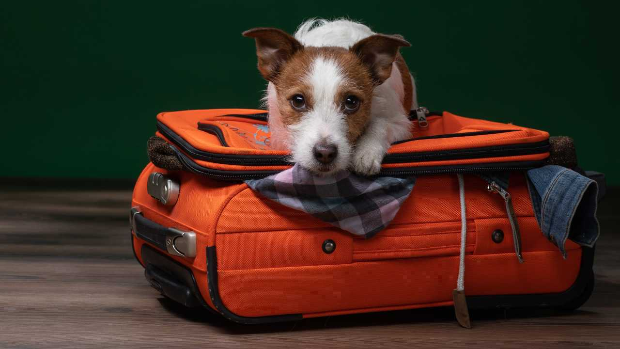 In viaggio con gli animali d'affezione: le norme UE da rispettare