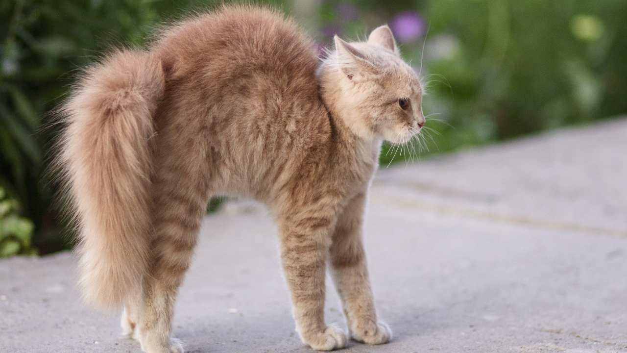 Come il gatto si difende da un attacco