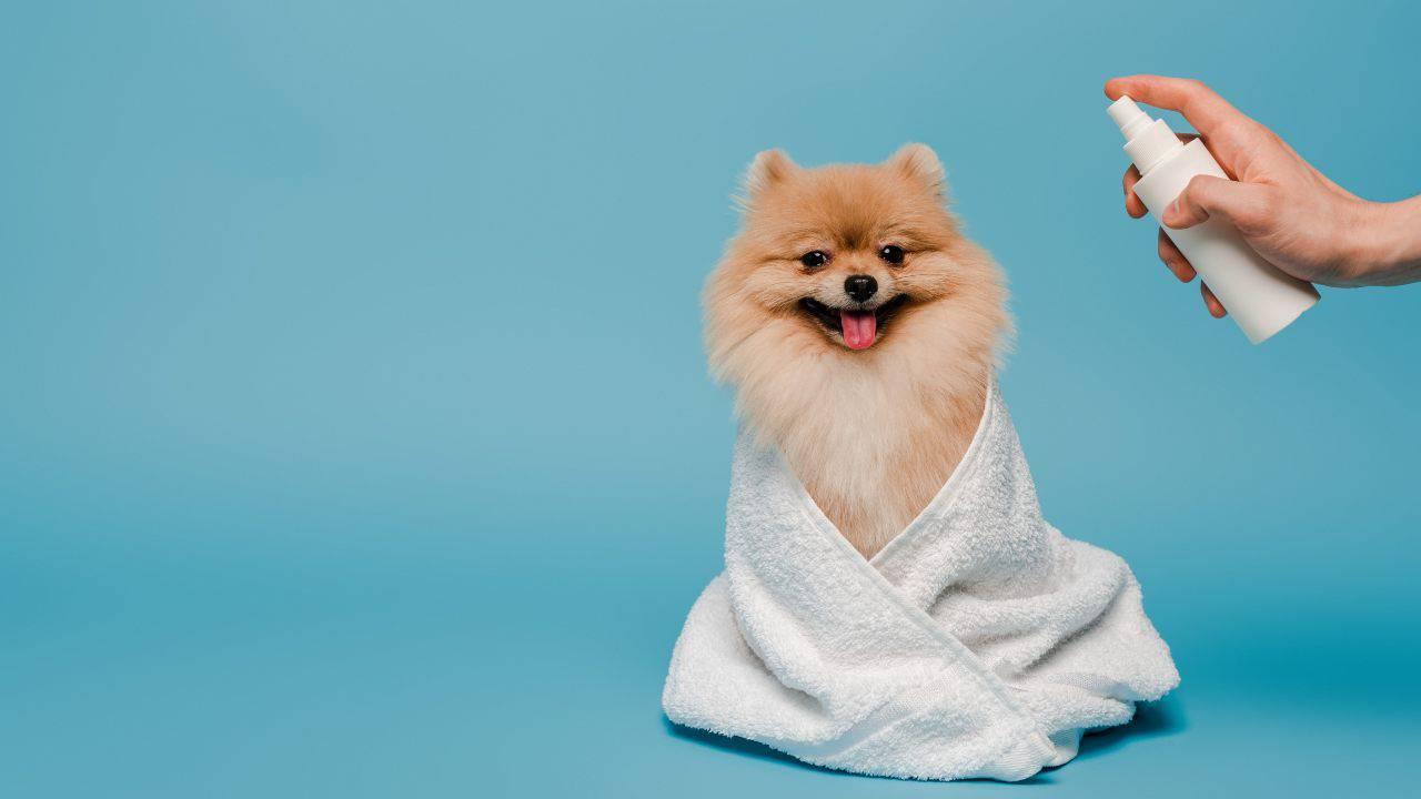 Spray antizanzare per cani