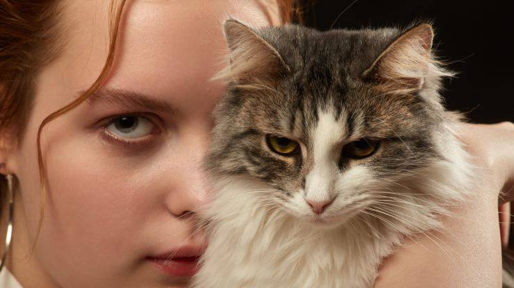 I gatti assorbono la negatività delle persone si o no