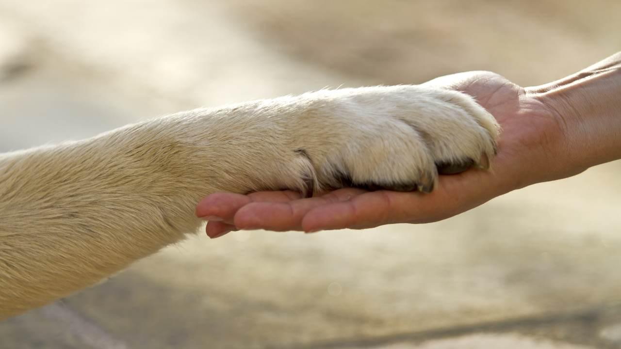 Morte improvvisa nel cane