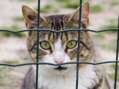 Cosa rischia chi maltratta un gatto