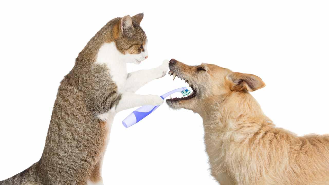 Le differenze tra i denti del cane e quelli del gatto