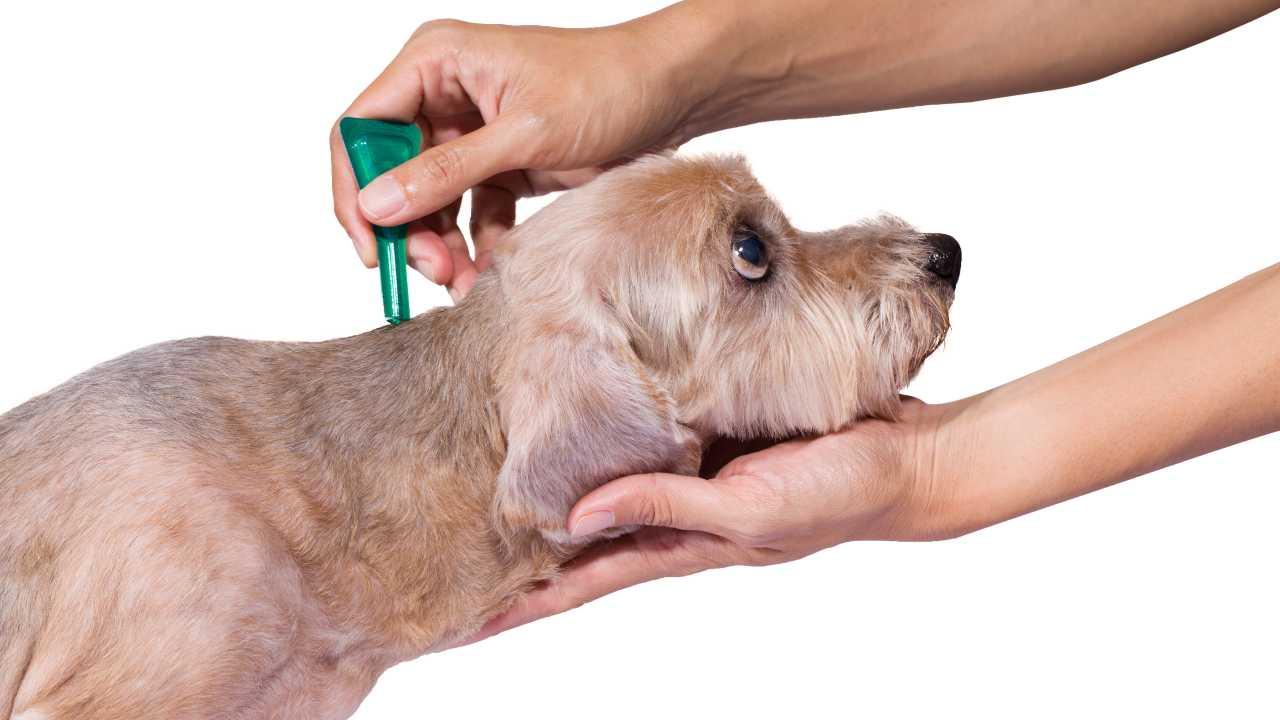 Antiparassitari naturali per il cane