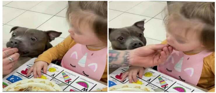 Bimba mangia le verdure solo dopo che il suo cane le assaggia (Screen video Instagram)