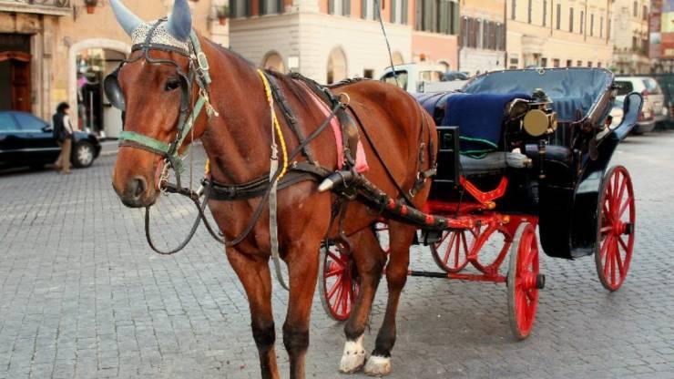 Botticelle Roma Nuova Ordinanza