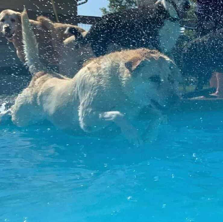 Cane che si diverte in piscina (Screen Instagram)
