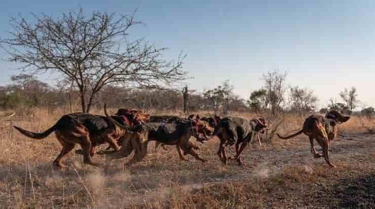 Cani che combattono contro il bracconaggio (Screen Instagram)