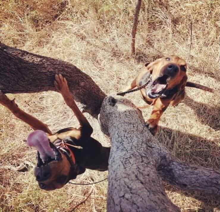 Cani che lottano contro il bracconaggio (Screen Instagram)