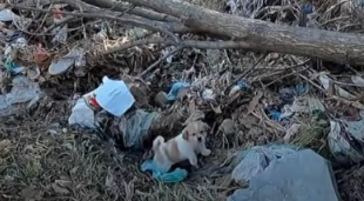 Il fratello del cucciolo ritrovato (Foto video)