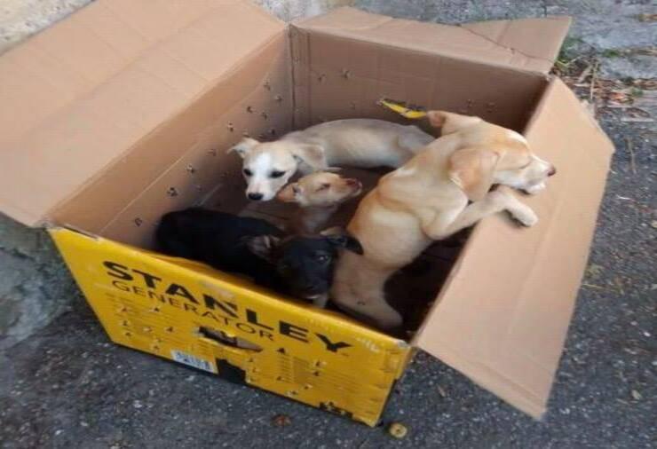Cuccioli abbandonati (Screen Facebook)