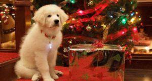 film Zampa e la magia del Natale