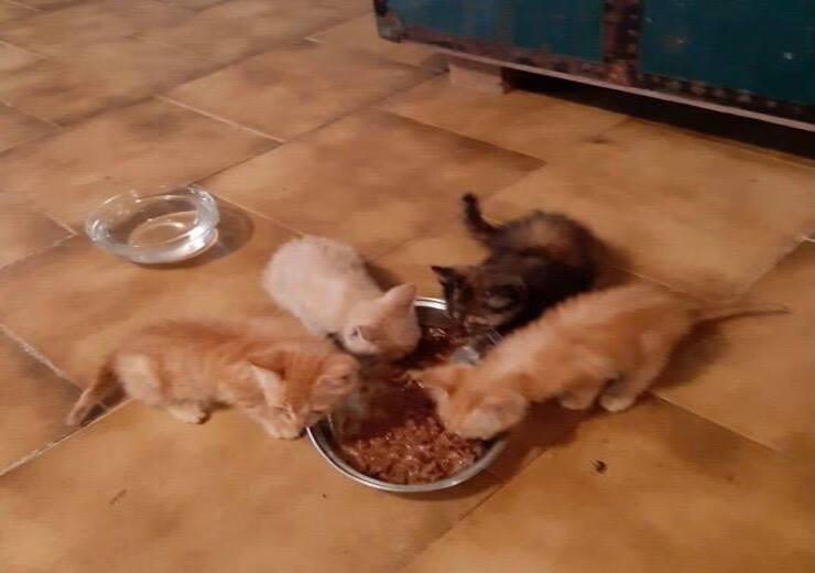 Gattini in cerca di casa (Screen Facebook)