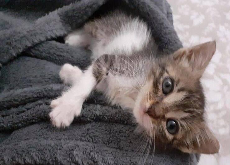 Gattino in cerca di casa (Screen Facebook)