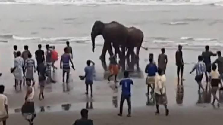 Elefanti Mare Salvati Video