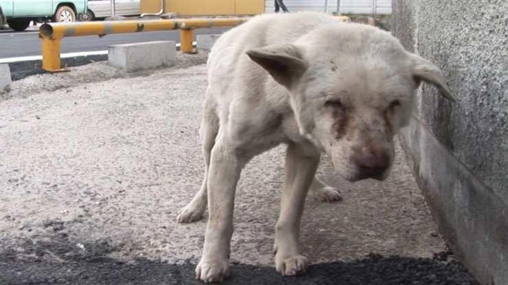 Cane depresso per la perdita della padrona (Foto dominio pubblico)