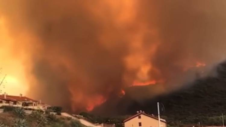 Fiamme Incendio Sardegna Cane Pastore