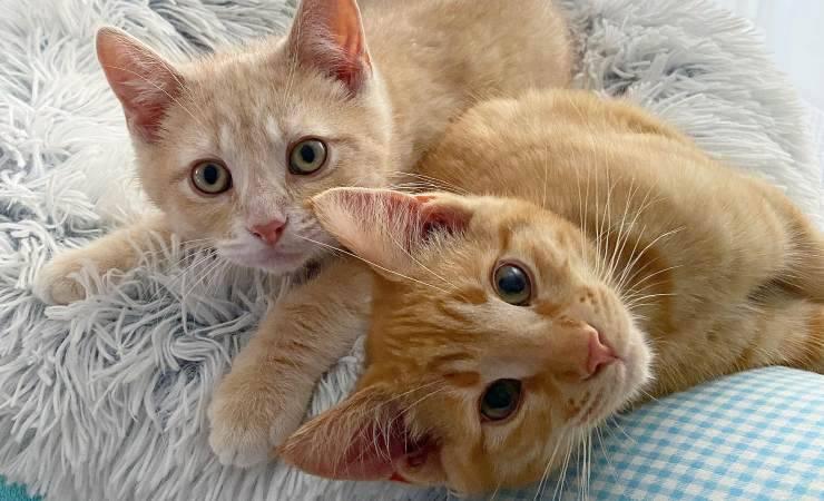 Gatto Arancione Giardino Cerca Aiuto