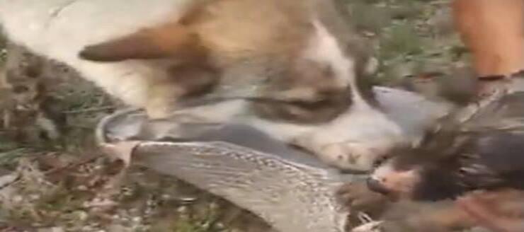 Mamma e cucciolo salvi (Screen video Youtube)