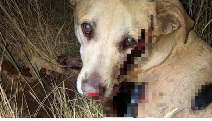 Marley il cane legato al paraurti e trascinato per 1000 metri (Foto Facebook)