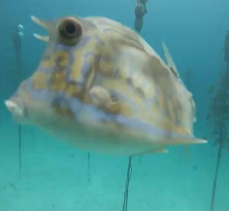 Pesce Palla (Screen Facebook)