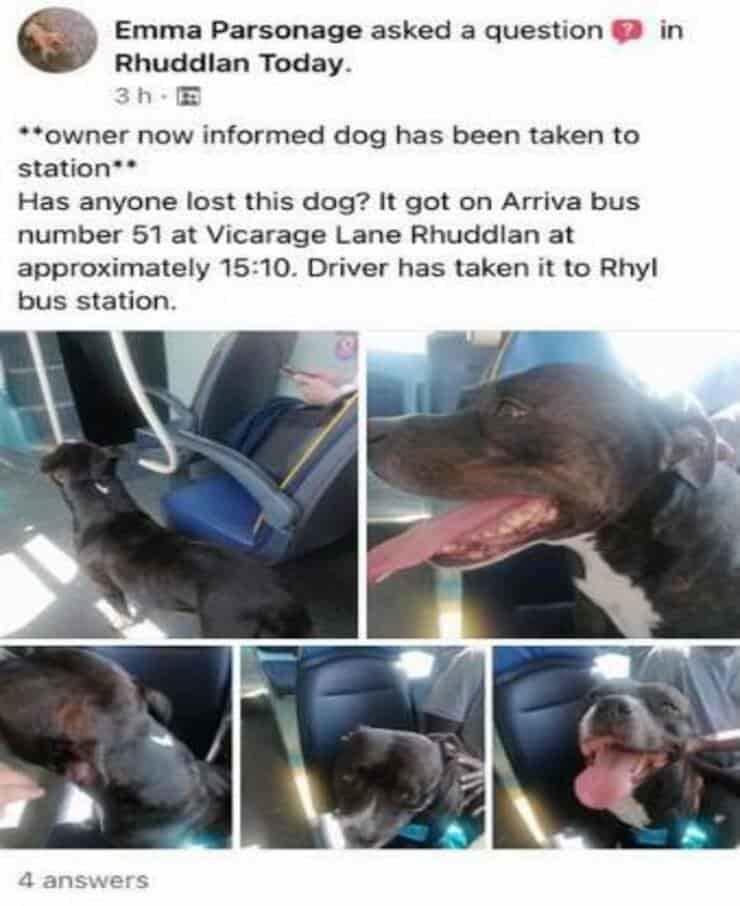 Post sulla presenza di un cane a bordo di un autobus (Screen Facebook)