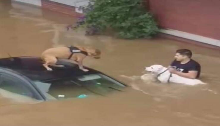 Salvataggio cuccioli durante alluvione Germania (Screen Facebook)