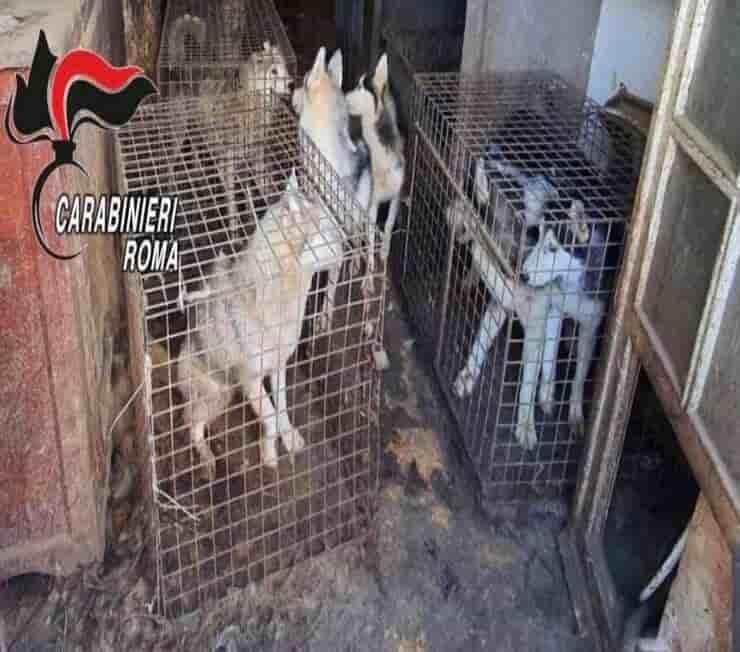 Situazione nella quale vivevano i 110 Husky salvati (Screen Facebook)