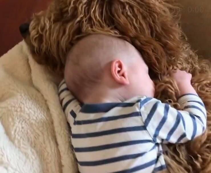 Theo dorme insieme al suo cucciolone (Screen video Instagram)
