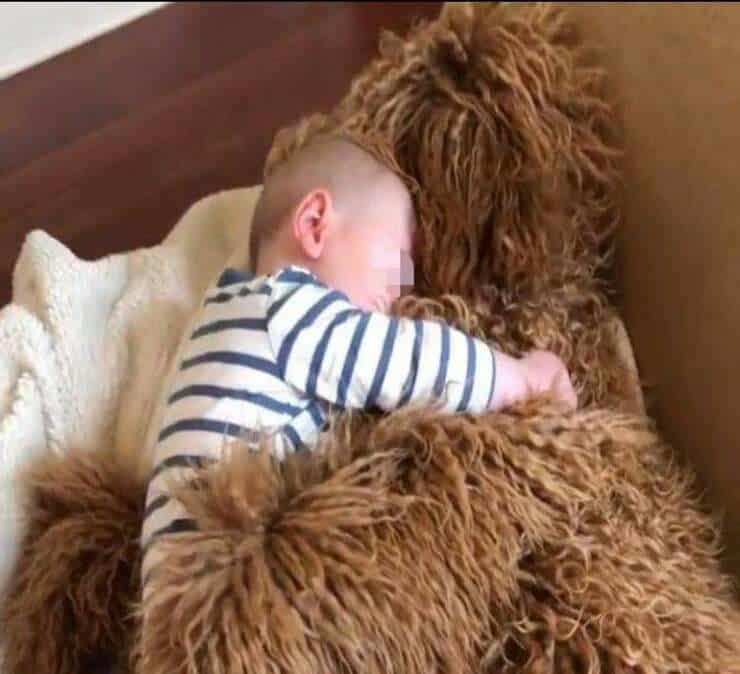 Theo e il suo cucciolo (Screen video Instagram)