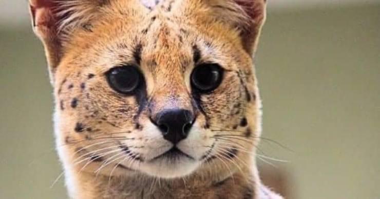 Marito Passeggiata Cane Moglie Felino Selvatico Casa