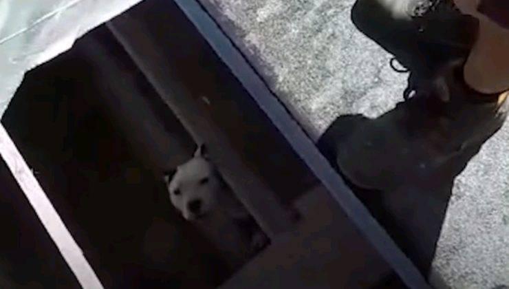 cane tomba operai cisterna