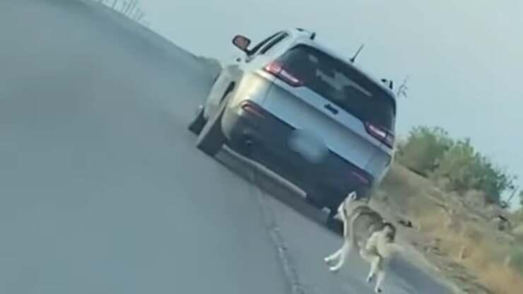 husky abbandono nel deserto (Screen Video)