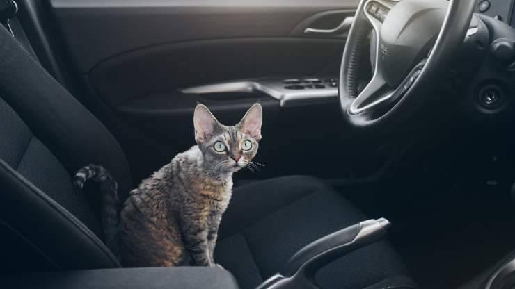 abituare gatto alla macchina