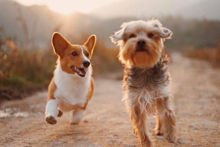 Razze di cani poco esigenti