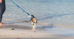 attività da fare con il cane in spiaggia
