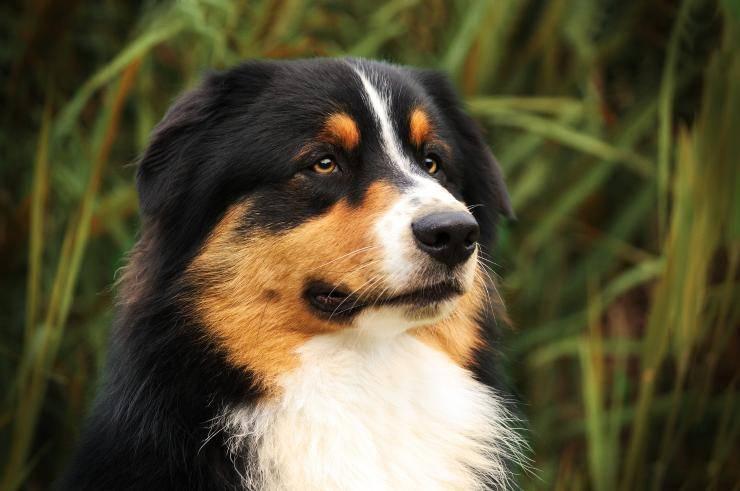 Cane nella natura