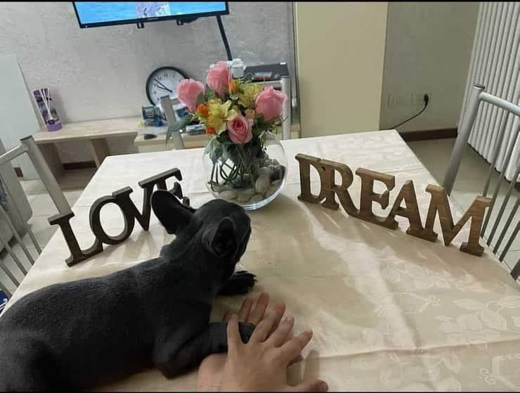 Il cane acquistato da Malika Chalhy