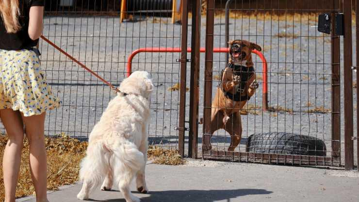 cane abbaia solo ad alcuni cani