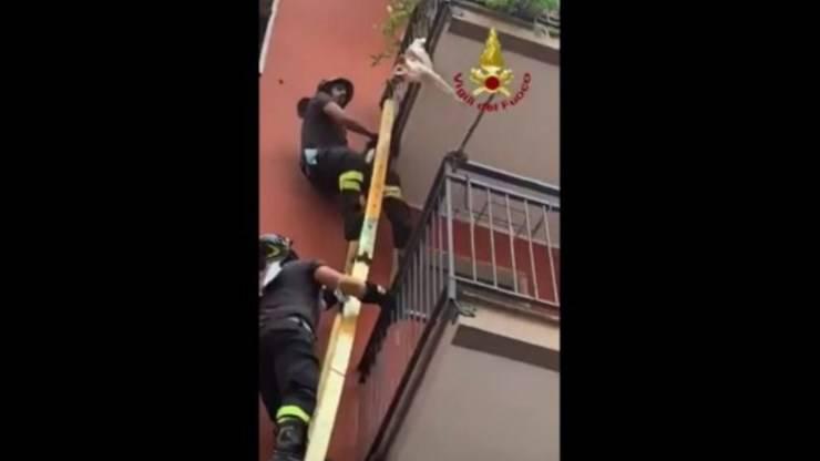 cane appeso balcone